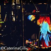 27 Settembre 2011 - Tunnel - Milano - Friendly Fires in concerto