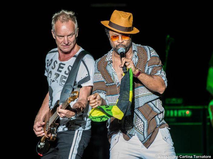 Sting e Shaggy: nuova musica sul videogioco Animal Crossing